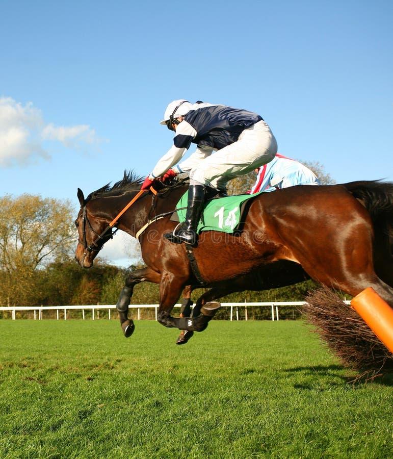 Het springen paarden royalty-vrije stock foto