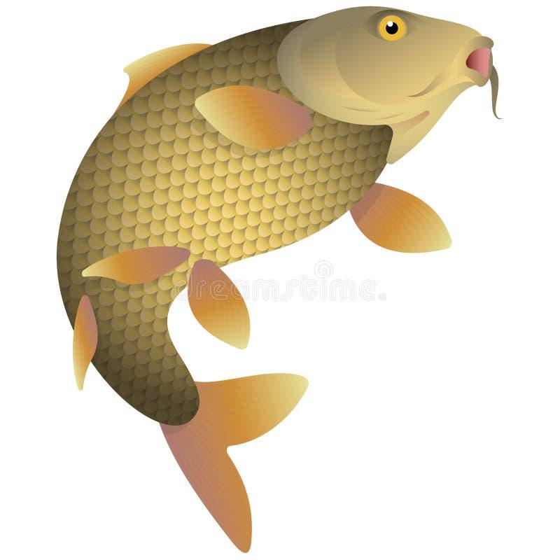 Het springen Riviervissen royalty-vrije illustratie