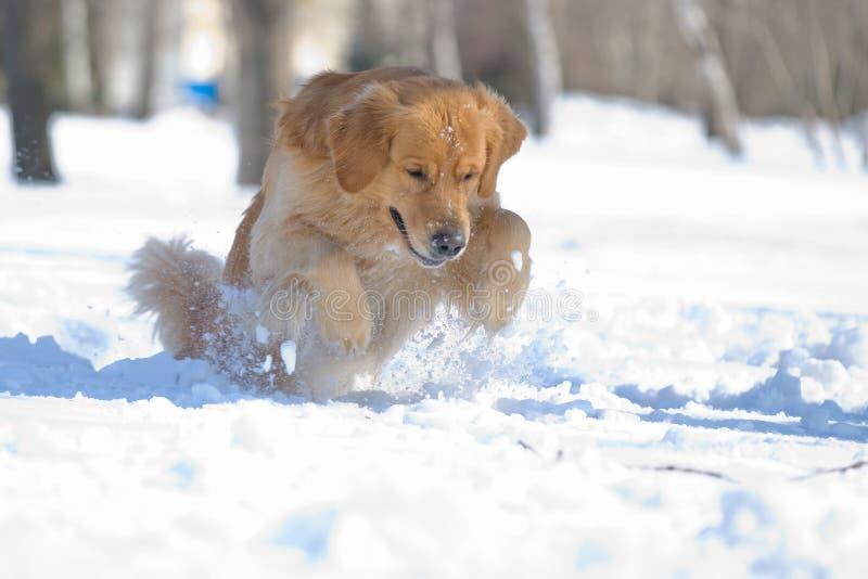 Het springen van de hond stock fotografie
