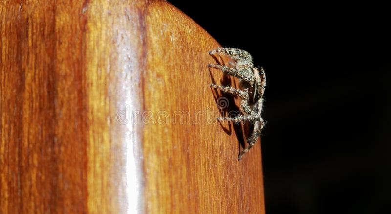Het springen van spin op een houten stoelbeen royalty-vrije stock foto