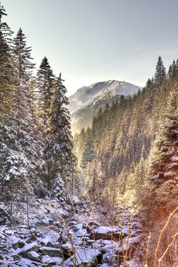 Het sprookje van de winter stock foto's