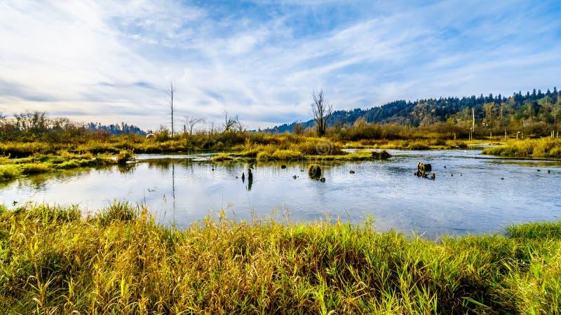 Het spwning - gronden van Stave River stroomafwaarts van de Ruskin-Dam in Hayward Lake dichtbij Opdracht, BC, Canada royalty-vrije stock fotografie