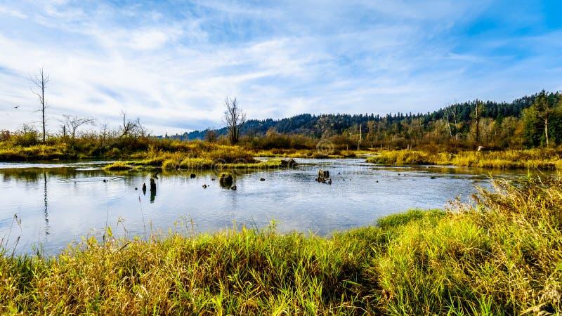 Het spwning - gronden van Stave River stroomafwaarts van de Ruskin-Dam in Hayward Lake dichtbij Opdracht, BC, Canada royalty-vrije stock foto