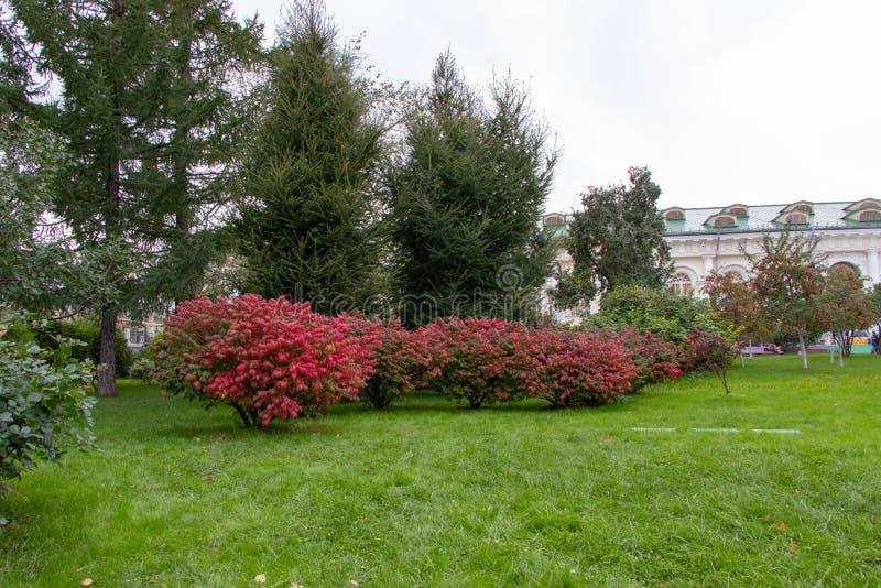Het stadspark van rust at groen op het gazon stock fotografie