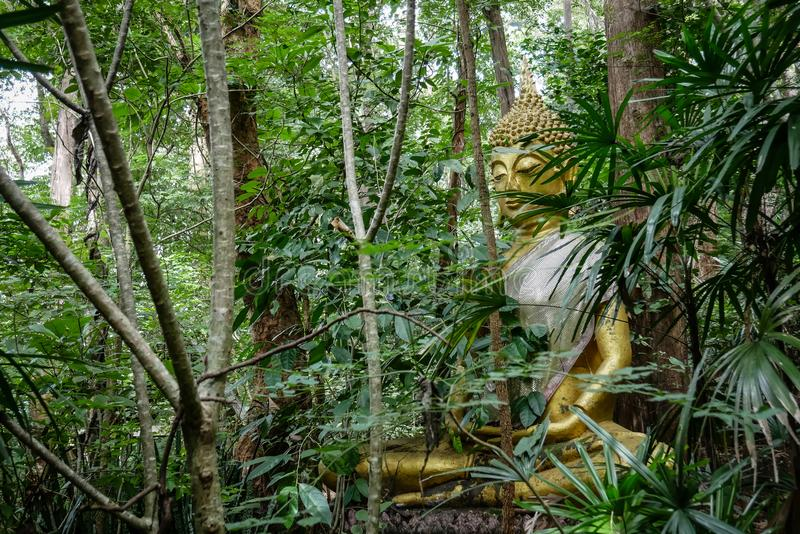 Het standbeeld van Boedha in bos, diepe meditatie in wildernis, vrede en aard stock foto