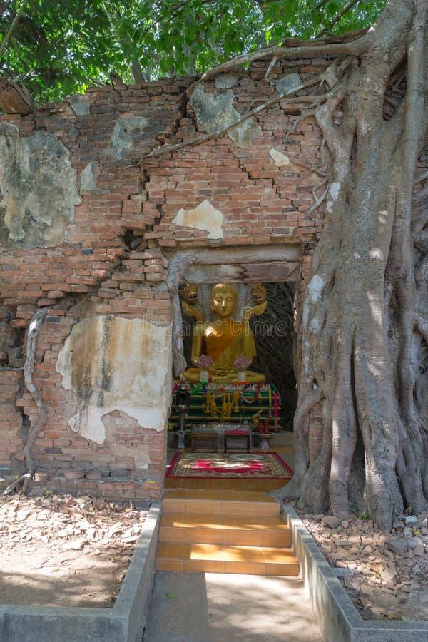 Het standbeeld van Boedha in oude tempel onder boomwortel royalty-vrije stock afbeelding