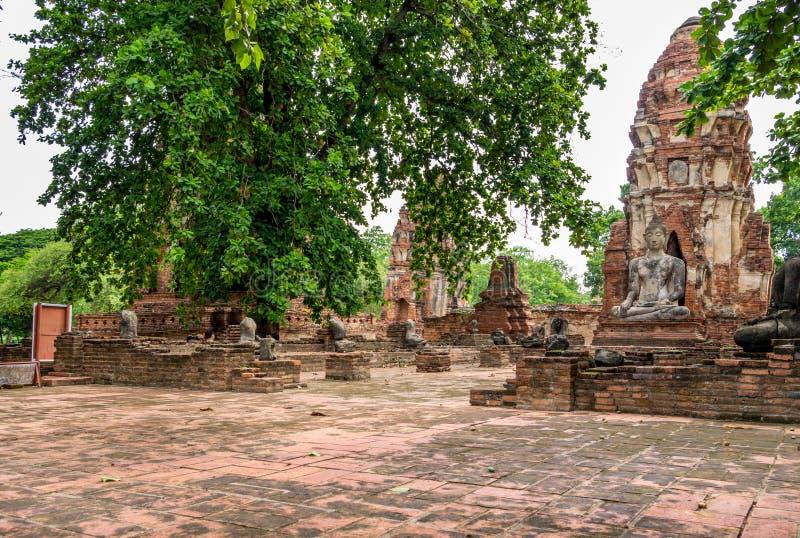 Het standbeeld van Boedha in Wat Mahathat, een geruïneerde tempel in Thaise Ayuthaya, stock foto