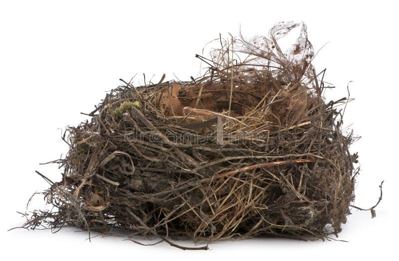 Het stapelen van de nadruk van een Nest van Gemeenschappelijke Merel royalty-vrije stock afbeelding