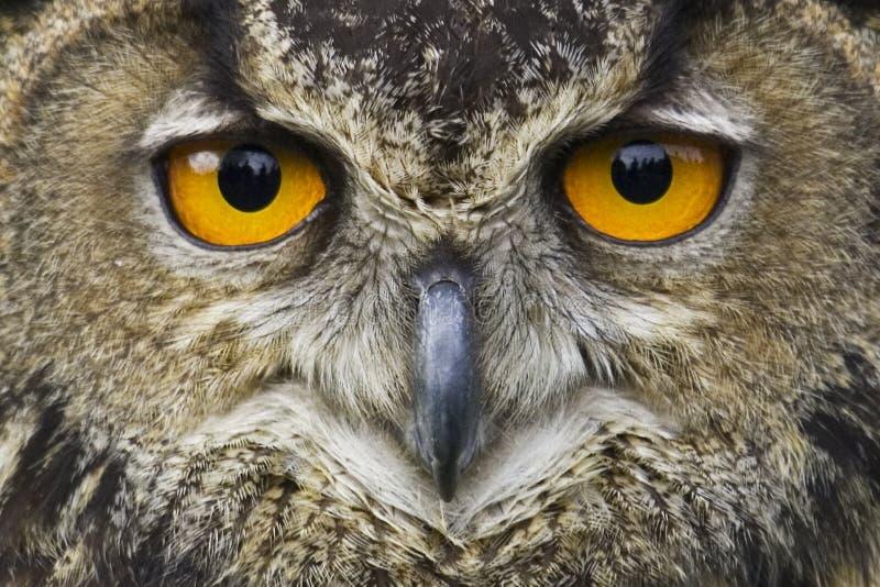 Het staren van de wijsheid stock afbeelding