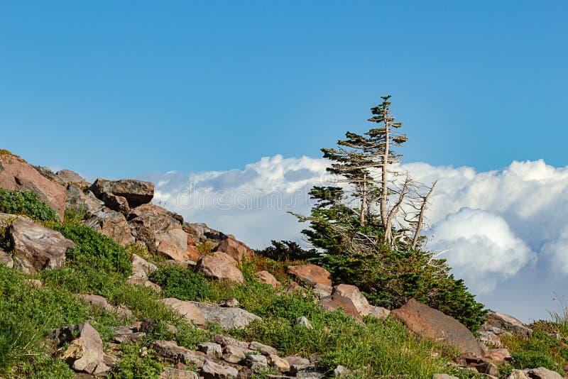 het steenachtige outcropping met gras en de boom zetten dichtbij regenachtiger op royalty-vrije stock afbeelding