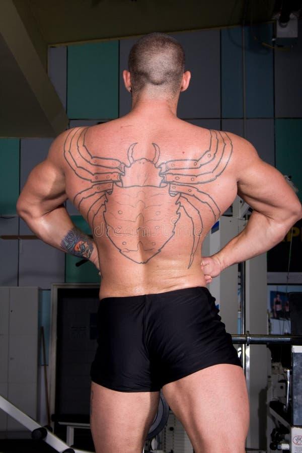 Het stellen van de bodybuilder royalty-vrije stock foto's