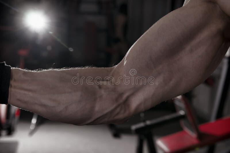 Het stellen van de bodybuilder in gymnastiek Perfecte spier mannelijke bicepsen royalty-vrije stock afbeeldingen