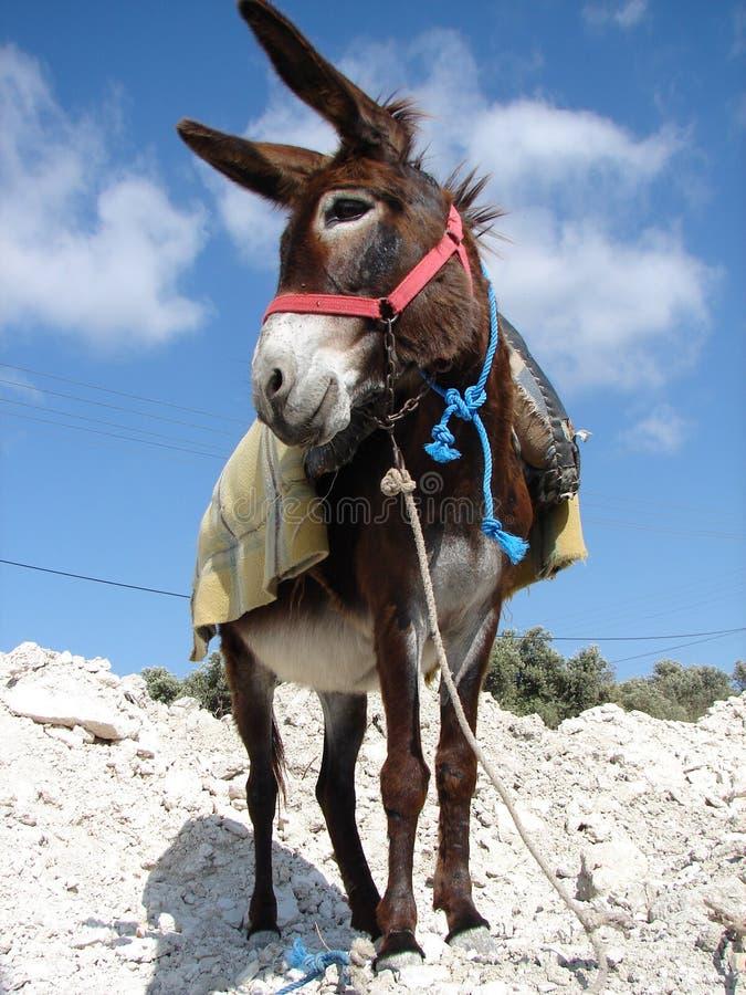 Het stellen van de ezel royalty-vrije stock fotografie