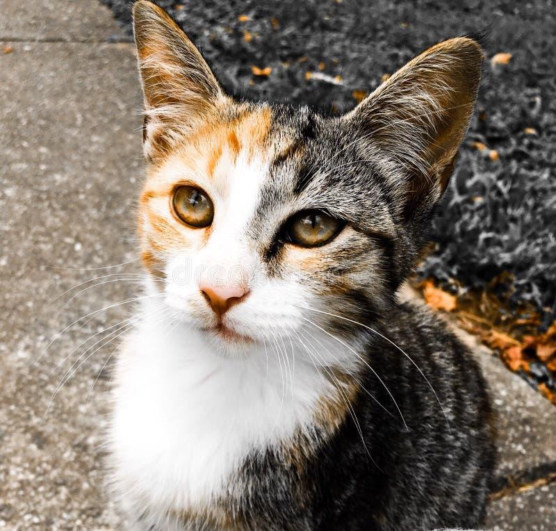 Het Stellen van de kat stock afbeelding