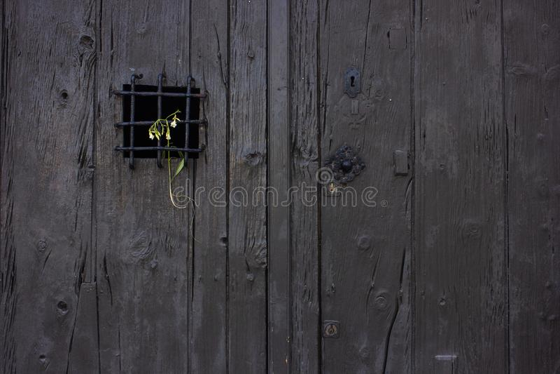 Het sterven bloem op het net van een oude rustieke deur wordt geplaatst die royalty-vrije stock afbeelding