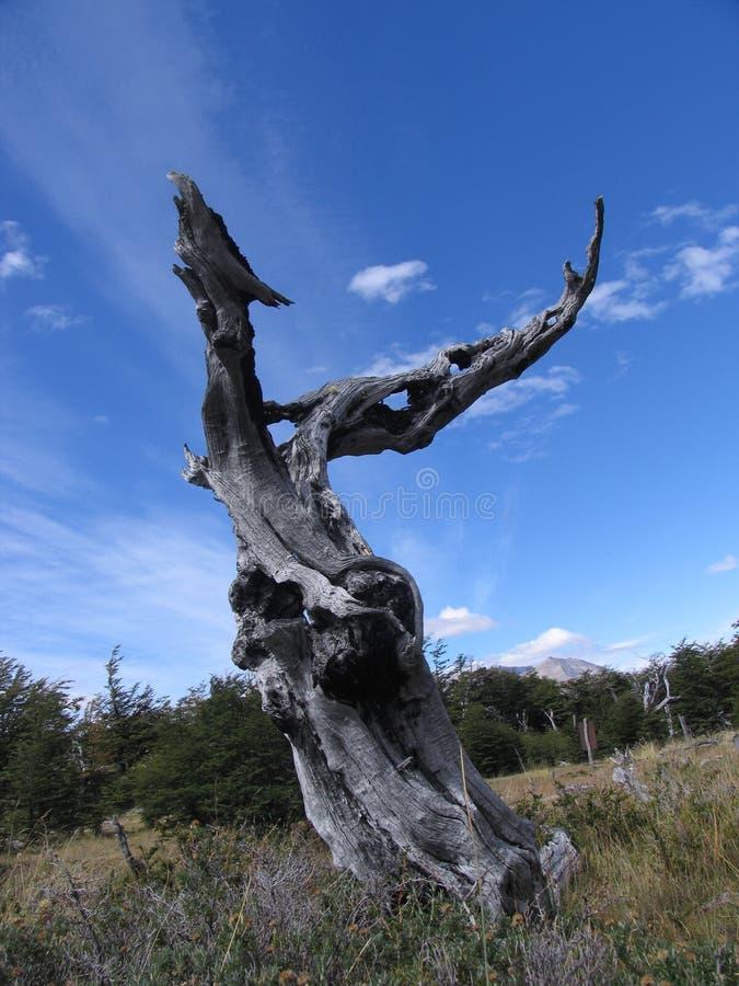 Het sterven boom royalty-vrije stock afbeeldingen