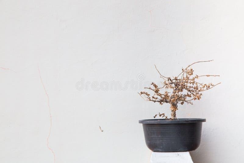 Het sterven boom royalty-vrije stock foto's