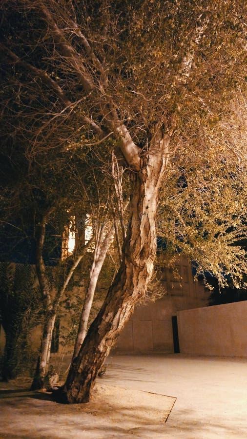 Het sterven boom stock foto