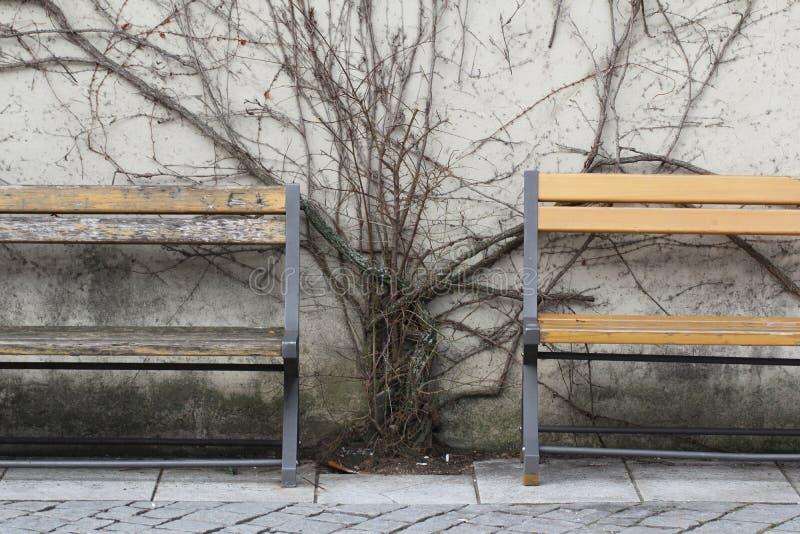 Het sterven boom op muur tussen rust houten retro stoel binnen vroeg van wintertijd bij openbaar park, oude vreedzame situatie royalty-vrije stock fotografie