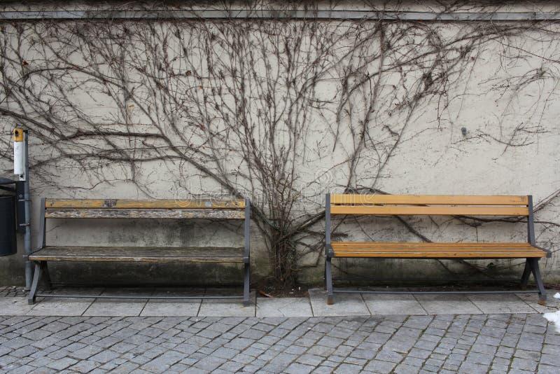 Het sterven boom op muur tussen rust houten retro stoel binnen vroeg van wintertijd bij openbaar park, oude vreedzame situatie stock fotografie