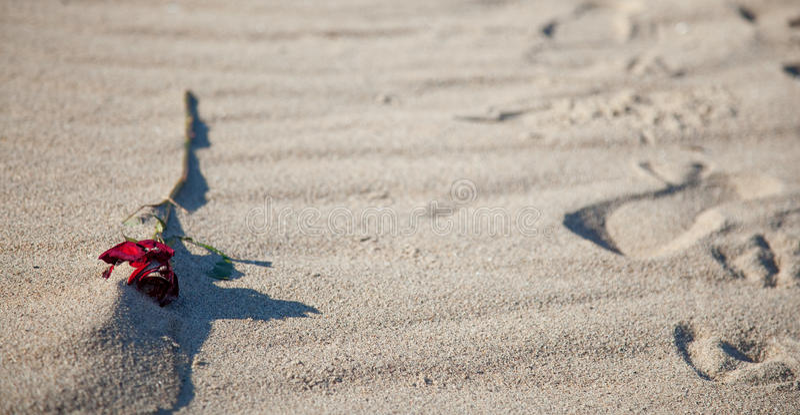 Het sterven nam in het zand toe stock foto
