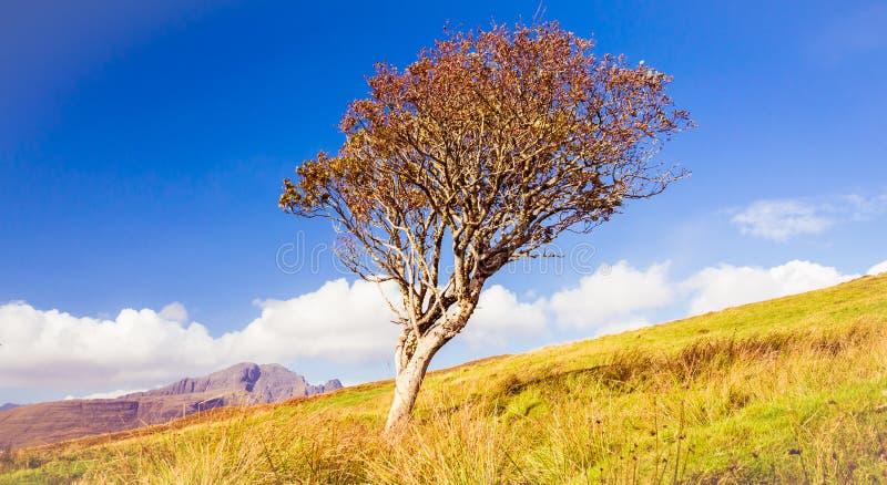 Het sterven oude eenzame boom in een godvergeten gat royalty-vrije stock fotografie