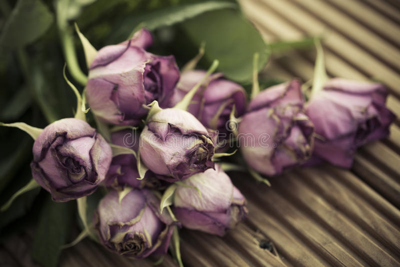 Het sterven verwelkte rozen op houten decking achtergrond stock afbeeldingen