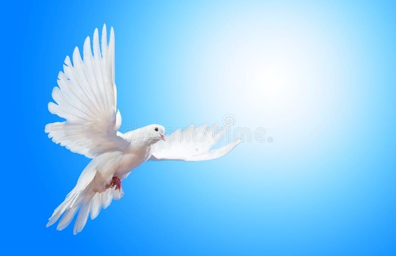 Het stijgen duif stock foto