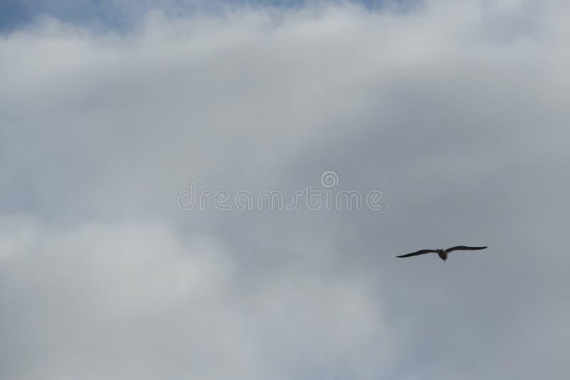 Het stijgen vogel royalty-vrije stock foto