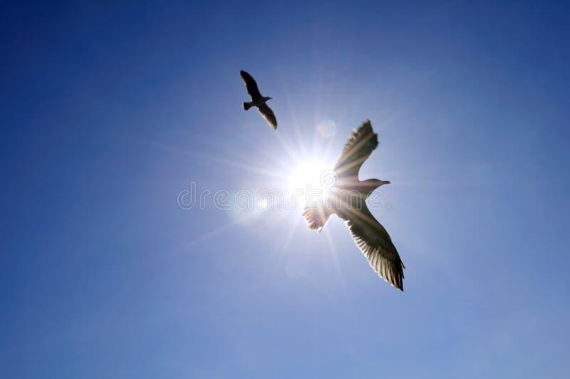 Het stijgen zeemeeuw in blauwe hemel stock foto