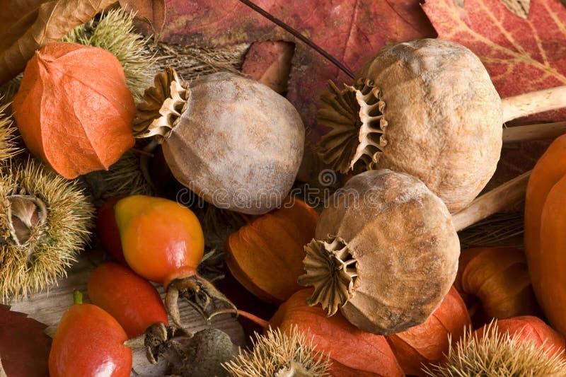 Het Stilleven van de herfst royalty-vrije stock foto