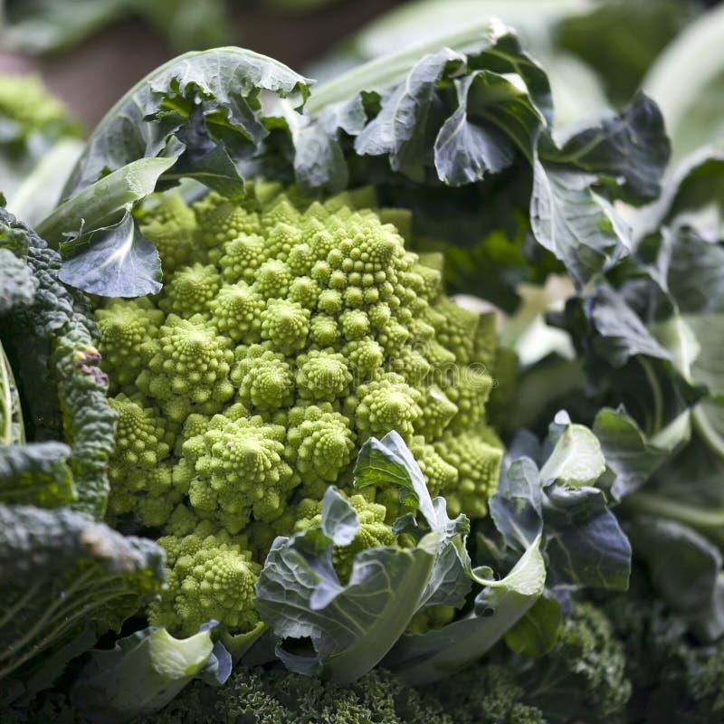 Het Stilleven van van romanescobloemkool of broccoli hoofden stock afbeeldingen