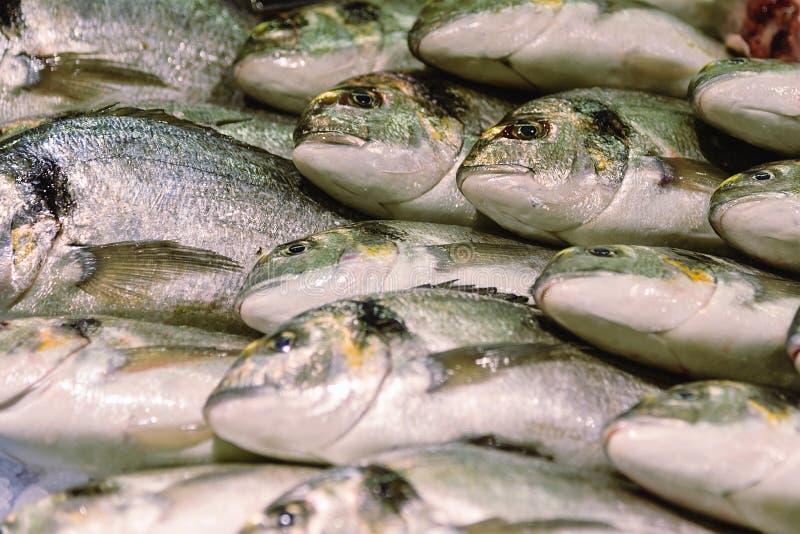 Het stilleven van vissen Verse vissen jonge zeug-Hoofd brasem op ijs stock fotografie