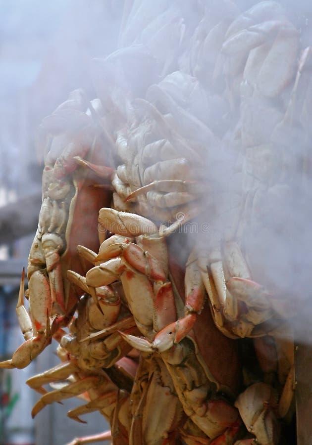 Het stomen van Krabben Dungeness stock fotografie