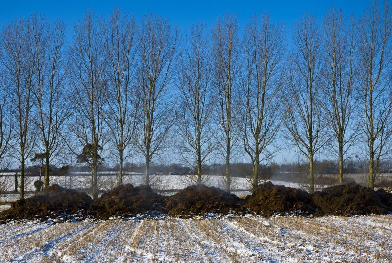 Het stomen van mest in een sneeuwstoppelveld. royalty-vrije stock afbeelding