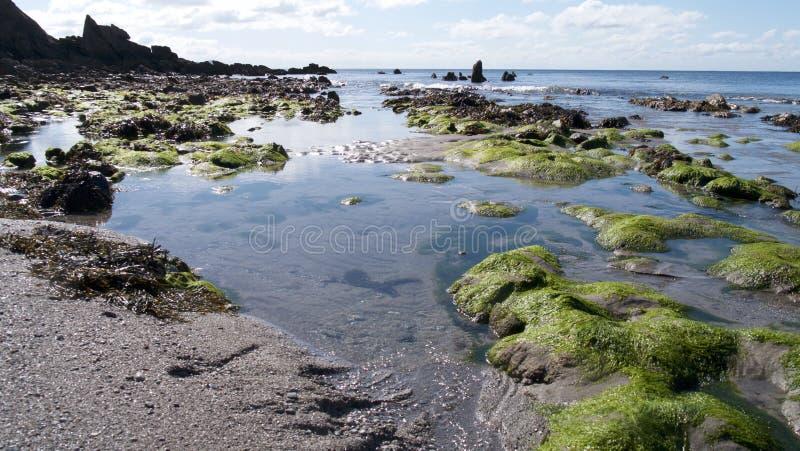 Het strand bij de lente stock afbeelding