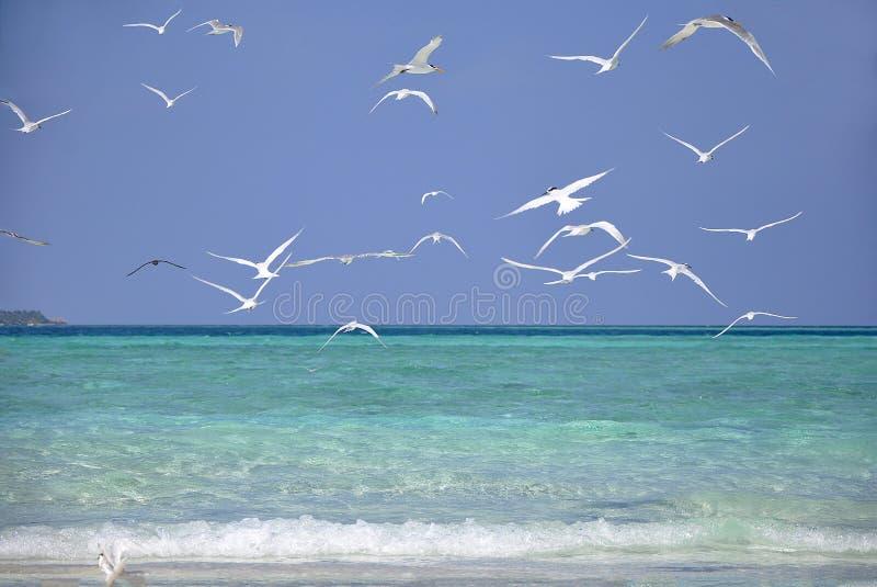 Het strand in de Maldiven stock fotografie