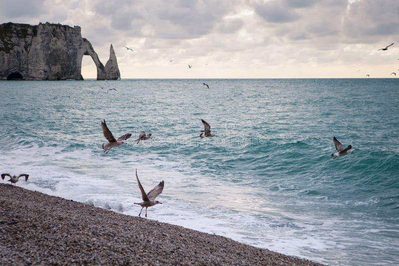 Het strand en de klippen met zeemeeuwen van Etretat, Normandië op de Franse kust stock fotografie