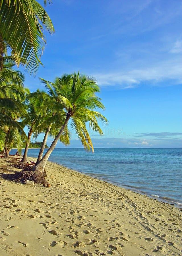 Het Strand en de Palmen van Fijian royalty-vrije stock afbeelding