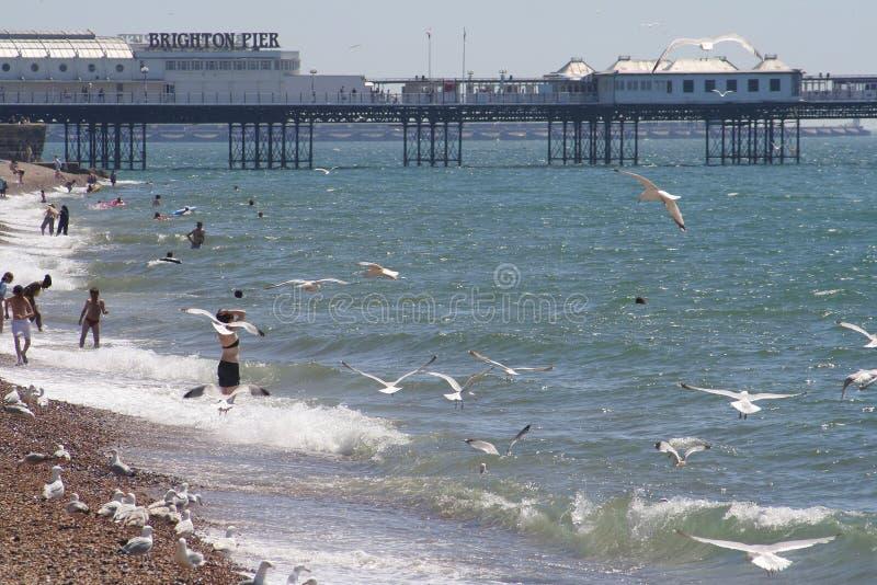 Het strand en de pijler van Brighton stock foto's