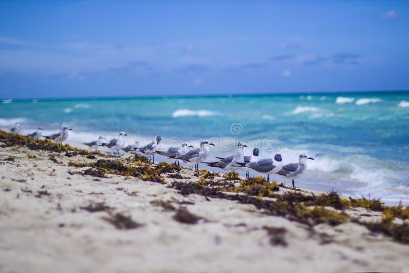 Het Strand en de Zeemeeuw van Miami stock foto