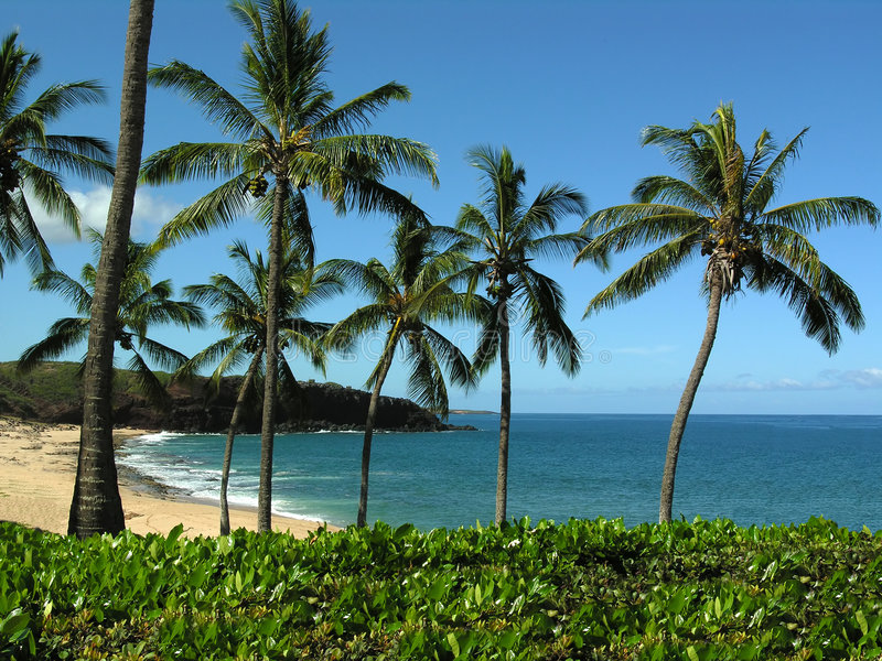 Het Strand Molokai Hawaï van Kepuhi stock foto