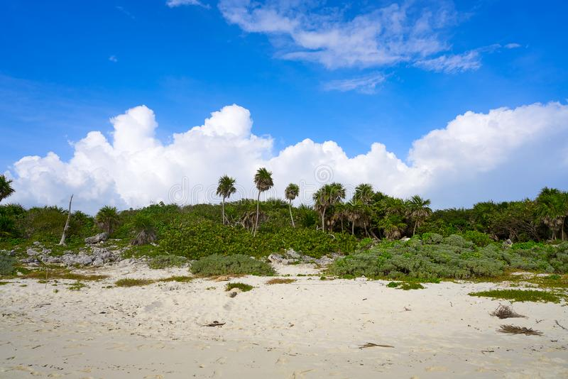 Het strand van Bush van het Cozumeleiland in Riviera Maya stock foto's
