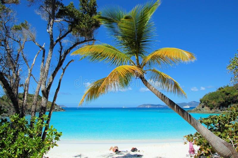 Het Strand van de boomstam royalty-vrije stock foto