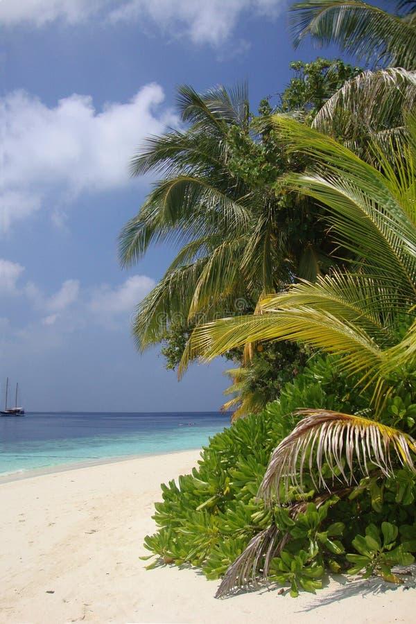 Het strand van de Maldiven royalty-vrije stock foto