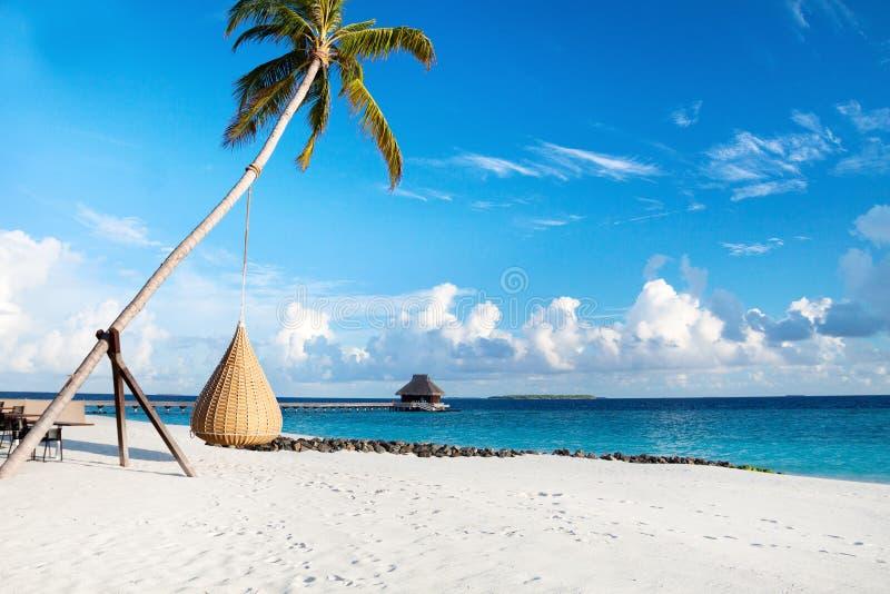 Het strand van de Maldiven met schommeling op palm stock foto