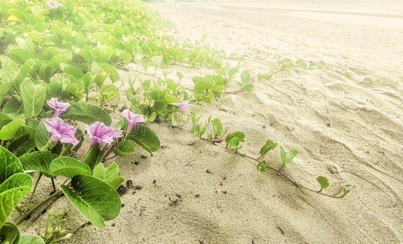 Het strand van de ochtendglorie stock fotografie