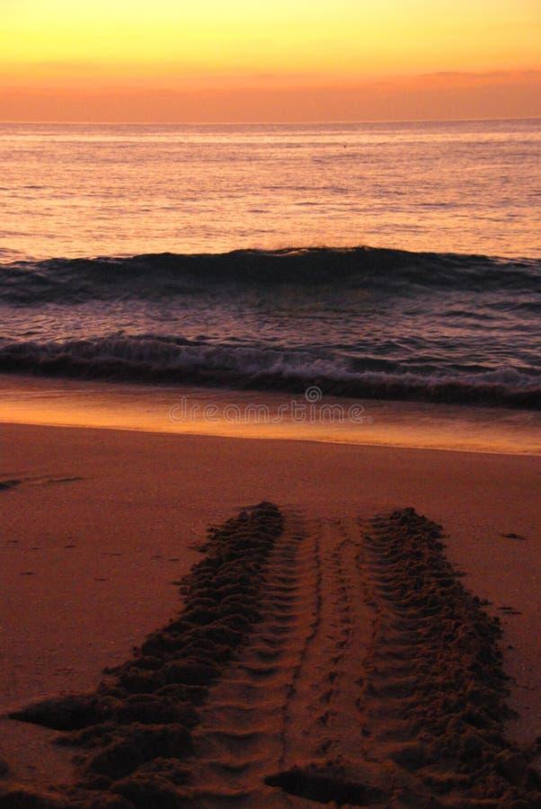 Het Strand van de schildpad stock foto's