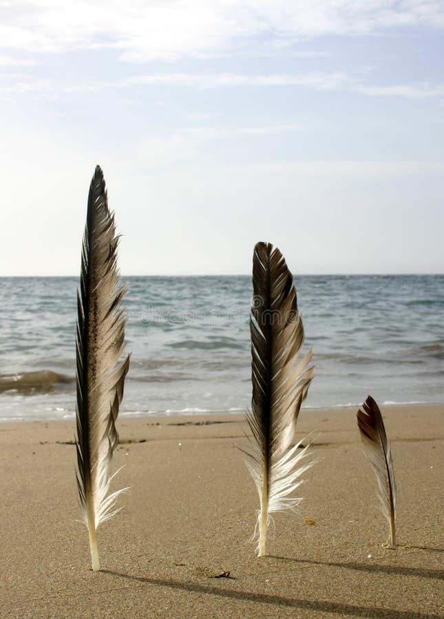 Het Strand Van Drie Veren Stock Afbeeldingen