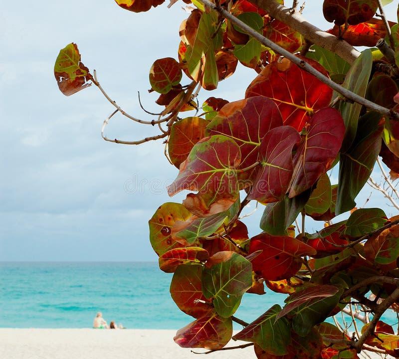 Het Strand van Grapeleaf royalty-vrije stock fotografie